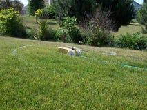 Lawn sprinkler royalty free stock images