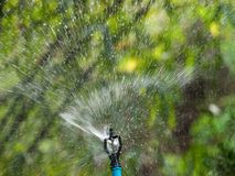 Lawn sprinkler. August splashing water on the lawn with sprinkler Stock Images