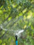 Lawn sprinkler. August splashing water on the lawn with sprinkler royalty free stock photography
