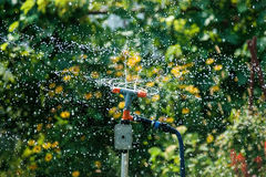 The lawn sprinkler Stock Photography
