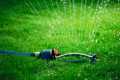 Lawn sprinkler spaying water over green grass. Royalty Free Stock Image