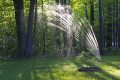 Lawn Sprinkler. Wooded lawn being watered by a hose and sprinkler Royalty Free Stock Image