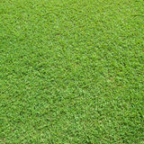 Lawn in a square Stock Photography