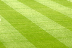 Lawn in a stadium Royalty Free Stock Photo