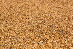 Lawn strewed by wooden chips Stock Image