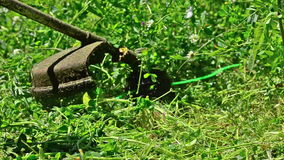 Lawn String Trimmer Cutting. Worker cutting the grass with Lawn String Trimmer stock video