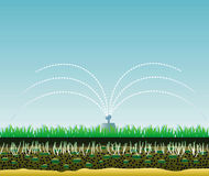 Lawn structure. Lawn structure and grass watering Stock Image