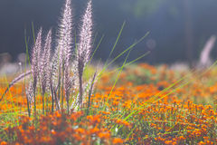 The lawn in the summer with bright decorative flowers Royalty Free Stock Photo