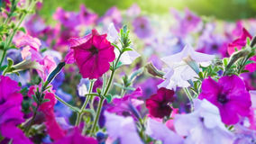 Lawn summer flowers Stock Image