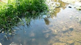 Lawn at sunlight next to a pond. Video showing a beautiful illuminated pond in the light of sun stock footage