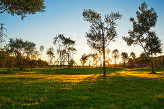 The lawn sunset landscape daqing Royalty Free Stock Photography