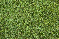 Lawn surface Stock Photos