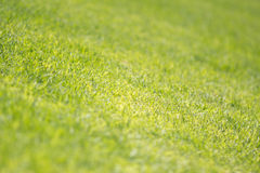 Lawn texture closeup royalty free stock image