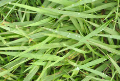 LAWN TEXTURE Royalty Free Stock Image