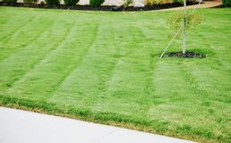 Lawn of thick, green grass royalty free stock image