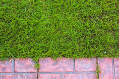 Lawn and Tiled at terrace stock image