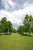 Lawn and tree. The sunlight shines forest and lawn Royalty Free Stock Photo