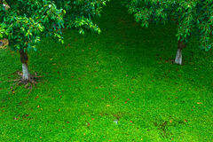Lawn with tree royalty free stock photos