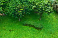 Lawn with tree Royalty Free Stock Photography
