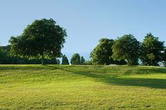 Lawn and tree Royalty Free Stock Photography