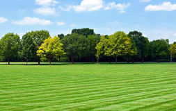 Lawn with Tree Line Stock Photography