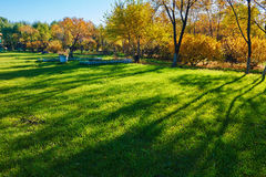 The lawn and tree's shadows Royalty Free Stock Photo