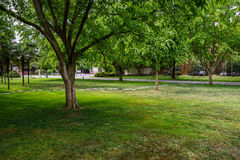 Lawn in tree shade Stock Image