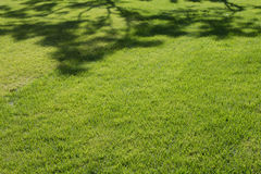 Lawn Royalty Free Stock Images