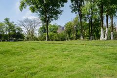 Lawn and trees in city on sunny summer day Royalty Free Stock Images
