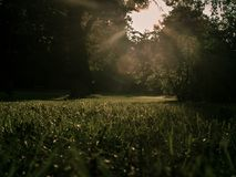 Lawn and trees illuminated by the rays of the sun royalty free stock photos