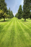 Lawn and trees in the park Royalty Free Stock Photography