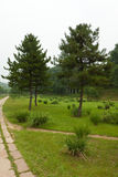 Lawn and trees in a park, north china Royalty Free Stock Image