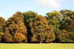 Lawn trees and sunlight during fall Royalty Free Stock Photo