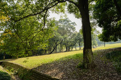Lawn and trees in warm morning Royalty Free Stock Image