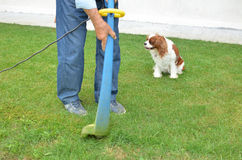 Lawn trimmer in a garden Stock Image