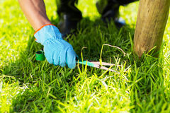 Lawn trimming Stock Photo