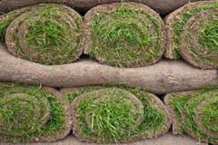 Lawn Turf Stock Image