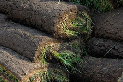 Lawn Turf Rolls Stock Photos