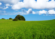 Lawn under blue sky Royalty Free Stock Photo