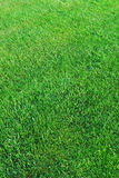 Lawn Stock Image