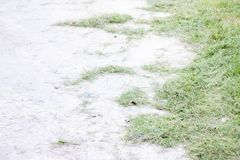 Lawn on cement. royalty free stock photo