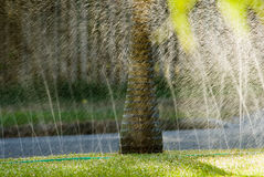 Lawn watering sprinkler. Soaker hose watering a lawn and palm trees on a very hot summers day. The use of lawn watering sprinklers late in the afternoon complies stock photography