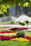 Lawn watering sprinkler Royalty Free Stock Image