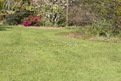 Lawn weed pests grass Royalty Free Stock Image