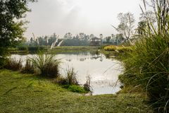 Lawn and weeds by pond in countryside of sunny winter afternoon. Lawn and weeds by the pond in the countryside of sunny winter afternoon,Chengdu,China royalty free stock images
