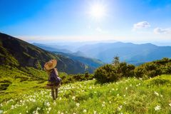 The lawn with white daffodils in the high mountains landscapes. The girl in overknees stockings, romantic dress. The lawn with white daffodils in the high Royalty Free Stock Photography