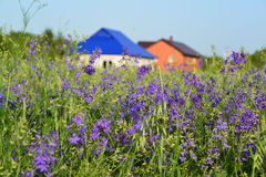 Lawn with wildflowers in front farmhouses Royalty Free Stock Photos
