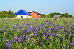 Lawn with wildflowers in front farmhouses Stock Photo