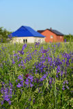 Lawn with wildflowers in front farmhouses Stock Photography