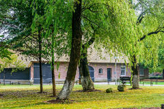 The lawn and willow Royalty Free Stock Images